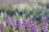 De beste bloemen voor volledige zon die eenjarige planten zijn