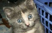 Vlo behandelingen voor Kittens jonger dan 8 weken