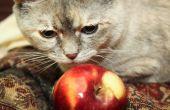 Zelfgemaakte voeding voor katten met een nierfalen