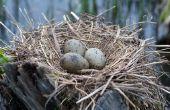 Ontwikkeling van baby vogel