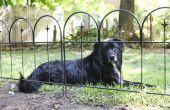 How to Stop honden uit plassen op een gazon