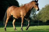 How to Build paard beslaan voorraden van hout