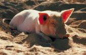 """Hoe maak je een """"Drie weinig varkens"""" kostuum"""