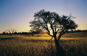 Amfibieën & reptielen die in de savanne leven
