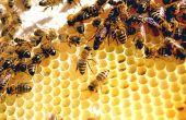 Verschil tussen klaver honing & natuurlijke zuivere honing