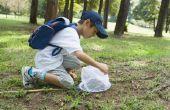 Vier van de meest voorkomende elementen in levende organismen