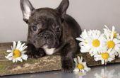 Kruiden & kruiden voor honden