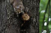 Hoe om te houden van eekhoorns van gaten in mijn propaan slang aan mijn Grill eten