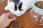 Hoe geeft men een kat een pil