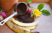Hoe maak je rozen bloeien met banaan en koffie gronden