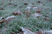 Hoe zorg voor uw gazon na koud weer Is Over