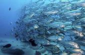 Het gemiddelde salaris van een oceanograaf