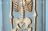 Hoe maak je een miniatuur-skelet