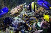 Wat temperatuur Is goed voor zoet water tropische vissen?