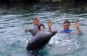 Waar om te zwemmen met dolfijnen