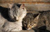 Hoe maak je een huis zonne-kat