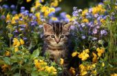Bloemen die giftig voor katten zijn