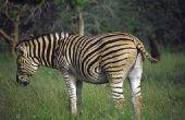 Afrikaanse planten & dieren