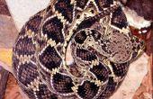 Hoe vindt u een slang in het Wild