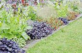 How to Grow een sier bataat Vine