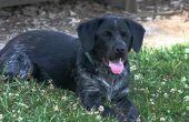Symptomen van hond respiratoire insufficiëntie