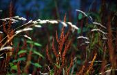 Hoe maak je een Herbicide Wick