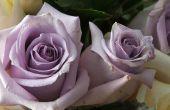 De soorten paarse rozen