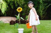 Feiten over zonnebloem planten voor kinderen
