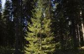 Verschillen tussen de groenblijvende en bladverliezende bossen