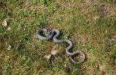 Identificeren van slangen in Michigan