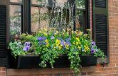 Goede planten & bloemen voor bloembakken