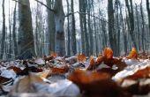 Hoe maak je bladeren in de grond Rot