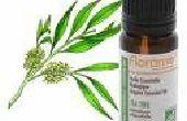 Hoe Heal insectenbeten met Tea Tree olie