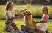 Hoe te verwijderen van gematteerd bont tijdens het zwemmen van een hond
