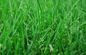 How to Grow gazon gras met behulp van stro