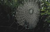 Spinnen in boom gaten