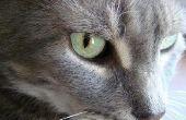 Diabetische kat met losse ontlasting