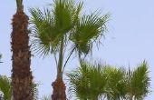 Hoe maak je een palmboom glad