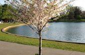 Symbolische betekenis van een boom kornoelje
