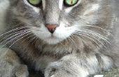 Het gebruik van tylosine voor diarree bij katten