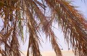 Palm snoeien zagen & Tools