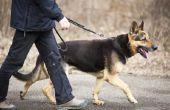 Hoe de zorg voor een hond met Megaesophagus