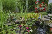 Hoe maak je een sprookje-tuin