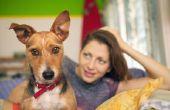 Bruine OORSMEER bij honden