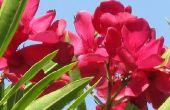 Bloeiende planten voor de Golfkust van Texas