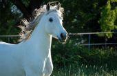 How to Make een Arabische paard kostuum