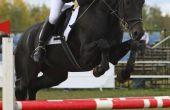 Hoe meet je een paard voor een Engelse Singel