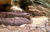 Hoe ziet een slang gat eruit?