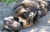 Natuurlijke vlo bad voor katten