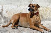 Schildklier testen bij honden